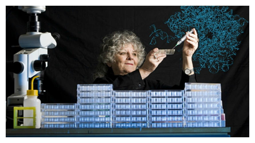 Ada E. Yonath performing crystallization experiments (photo: Nobelprize.org)
